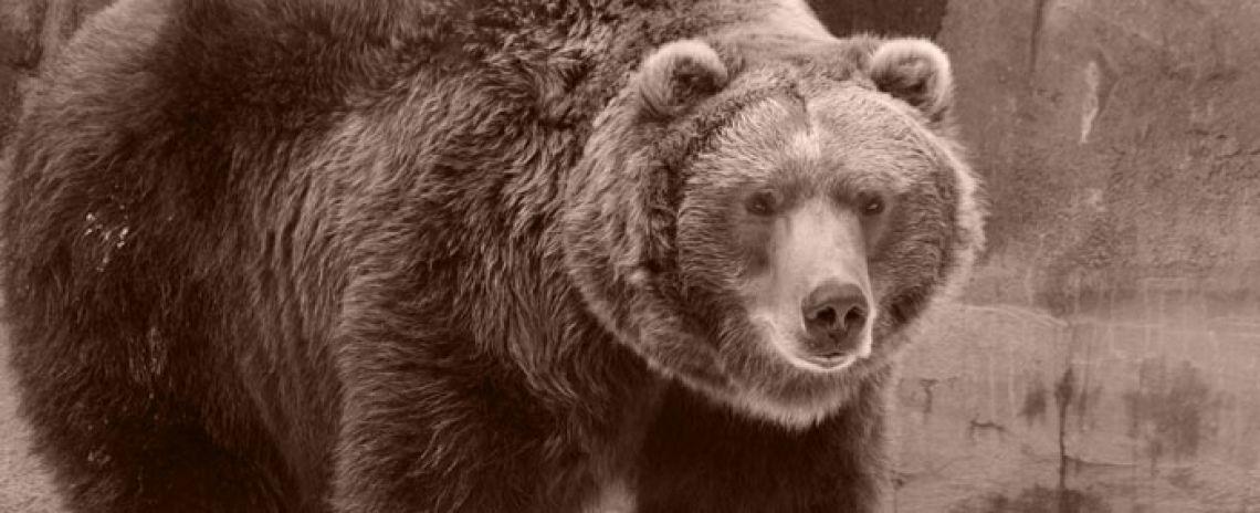 monstrum vysoké vlkodlaci pravidlo rychlost datování